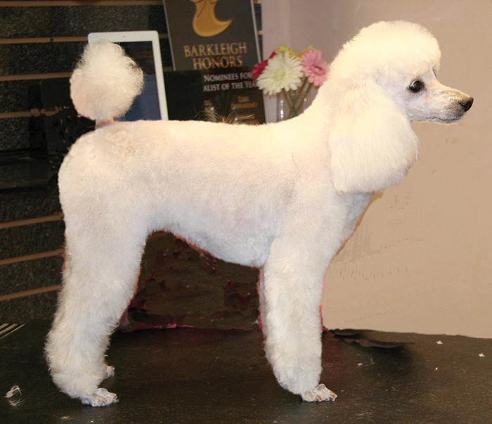 5-DOG-HAIR-STYLES-FOR-GROOMING